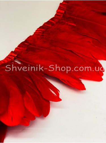 Перо на ленте цвет Красный Длина : 16 см в упаковке 2 м