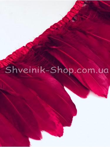 Перо на ленте цвет Бордо Длина : 16 см в упаковке 2 м